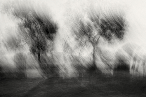 """From the """"Transience Series,"""" by Siddhartha Tawadey"""