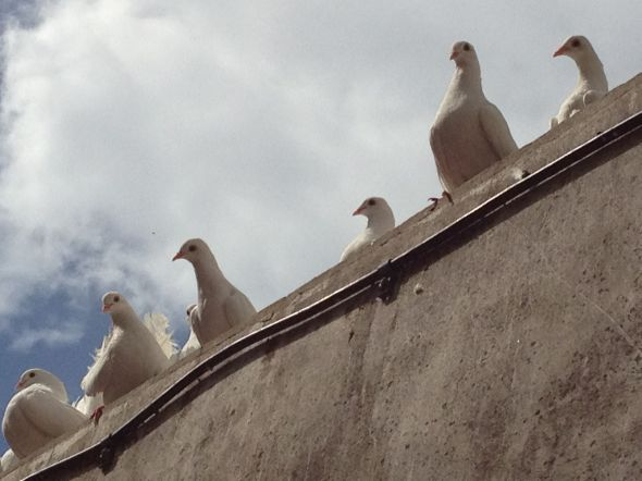 Doves on a Building by M. Pitter